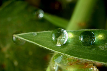 sunlight on droplets