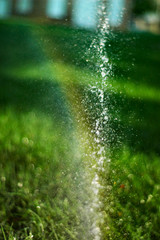 rainbow in the sprinkler