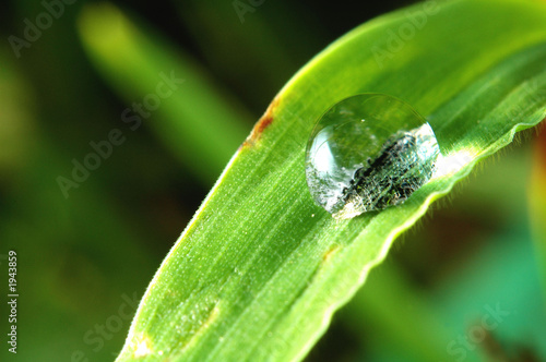 sunlit water droplet in grass