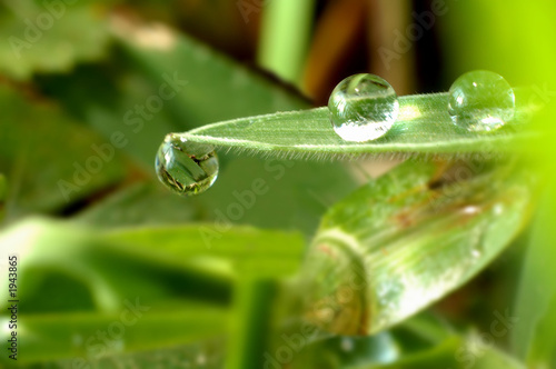 clinging droplet
