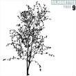 tree silhouette 09