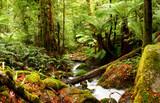 ancient rainforest poster