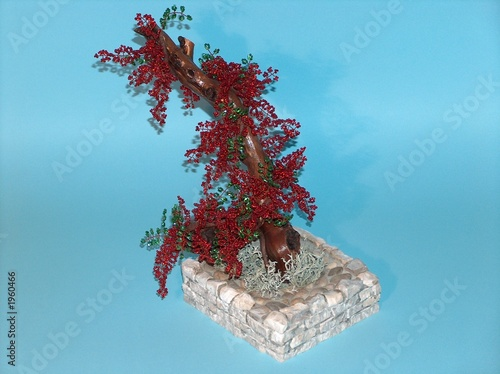 bonsai bugenvilia