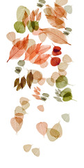 autumn tints_white