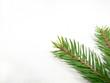 spruce green 02