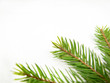 spruce green 01