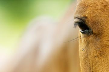 portrait de poney pour noël