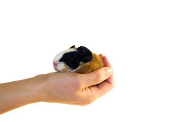 newborn in a hand