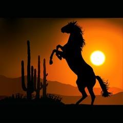 horse silhouette a