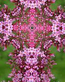butterfly bush blossom cross poster