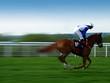 race horse - 1978420