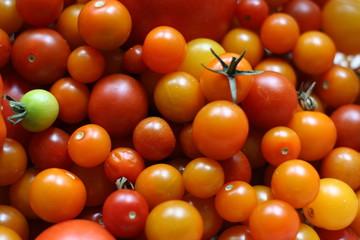 abundant cherry tomatoes