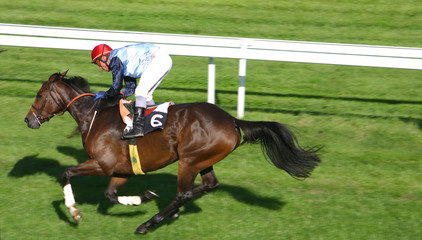 cheval de course - horse race