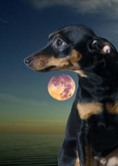 doggy imagination