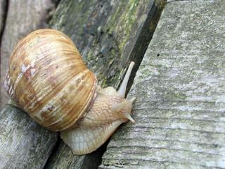 snail on the platform