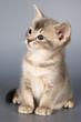 roleta: kitten whom the first time poses in studio
