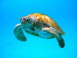 Fototapete Unterwasser - Karg - Meeressäuger