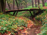 little bridge in forest