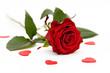 Leinwandbild Motiv red rose