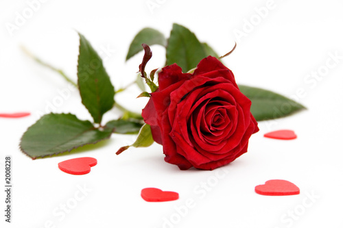 Fototapete Blumen - Rosen - Tulpen - Poster - Aufkleber