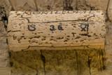 wine cork. poster