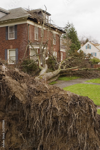 Leinwandbild Motiv fallen tree and house