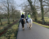 horses country lane poster