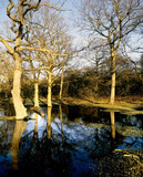 flooded woodland poster