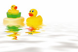 rubber ducks  in water poster