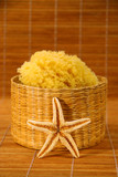 sea sponge and starfish poster