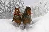 Fototapety sleigh ride