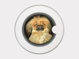 dog in washing machine poster