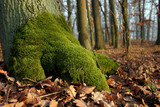 moss on the tree - autumn motive from the forest poster