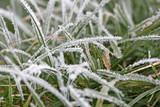 herbe gelée poster