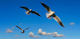 bright sky panorama  with seagulls poster