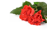 bunch of red roses with copyspace poster