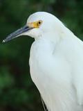 egret head and shoulders poster
