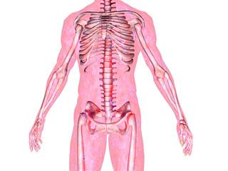 skeleton_body