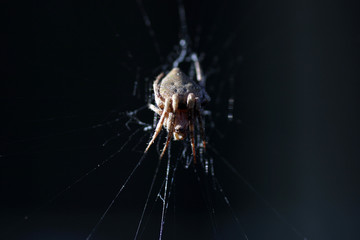 porch spider side light
