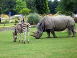 rhinoceros and zebra in the zoo poster