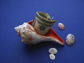 conch shell and currency