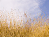yellow dry grass