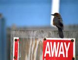 away bird poster
