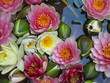 water lilies - 2082624