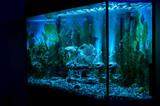 aquarium poster