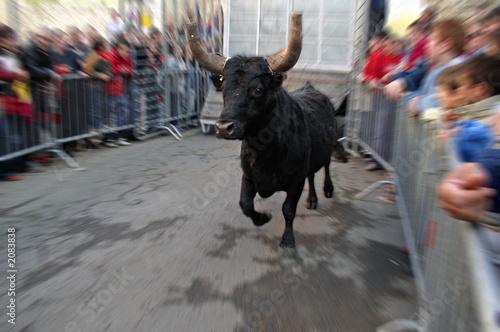 Leinwandbild Motiv feria taureau