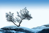 alone tree grow over blue sky on stone poster