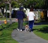 couple walking their dog poster