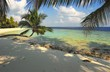 nice beach with palm tree