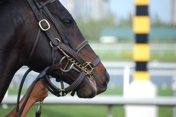 racehorse profile